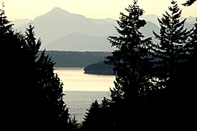 Puget Sound through the trees