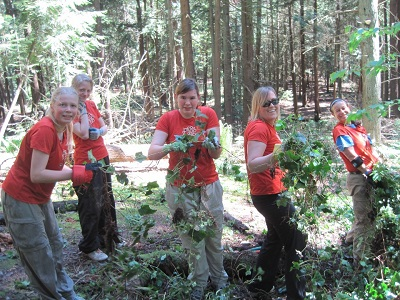 Volunteers pulling invasive ivy from a wooded park.