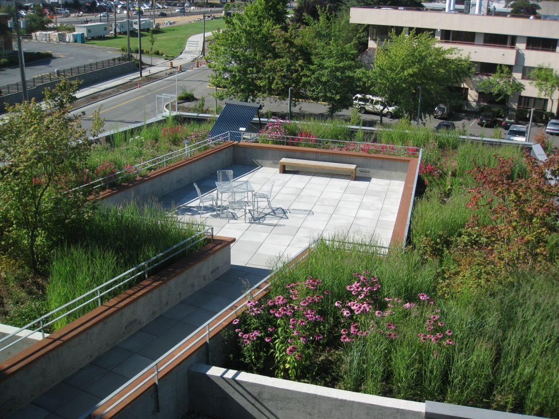 City Hall green Roof rain garden