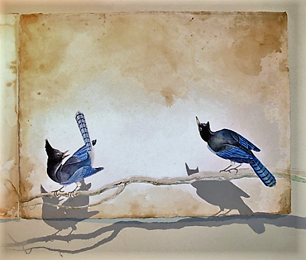 Justin Gibbens_Birds and Bees (Stellar's Jays) 2006