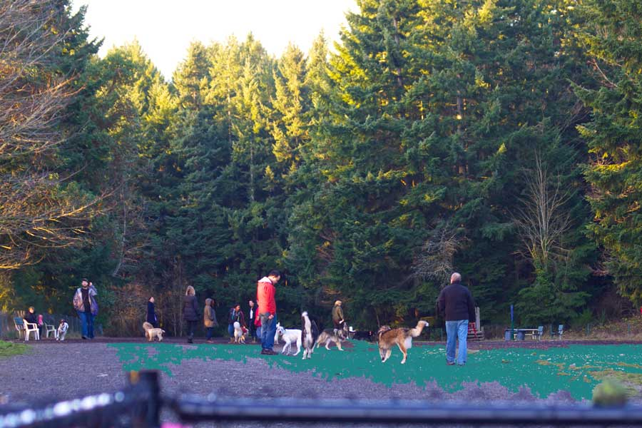 Shoreview-Off-Leash-Dog-Area